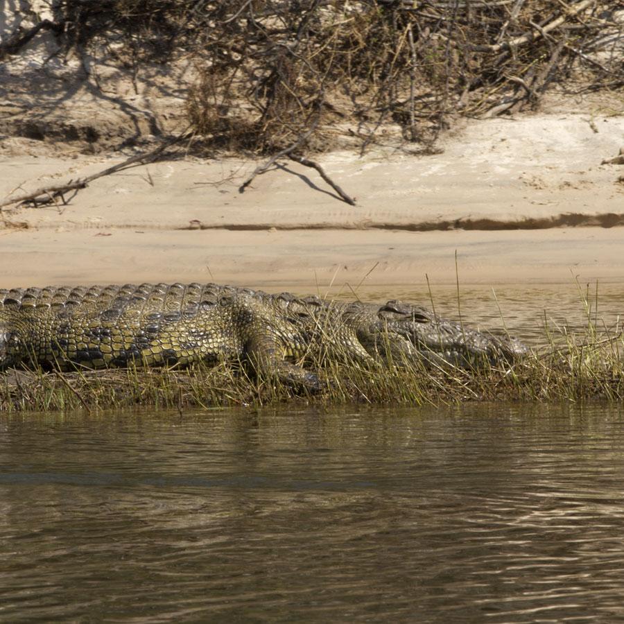 Zambezi River Canoe Day Trip | Safpar Canoe Trips
