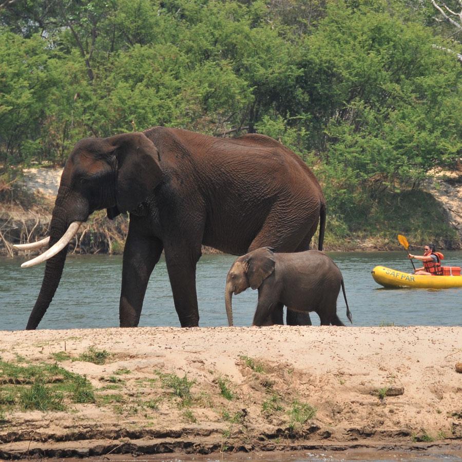 Zambezi River Canoe Day Trip